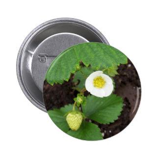 Strawberry Plant Button