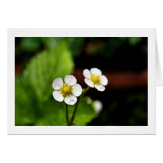 Strawberry Plant Flowers Greeting Card