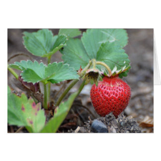 Strawberry Plant Greeting Card