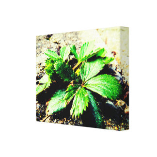 Strawberry Plant Macro Canvas Print