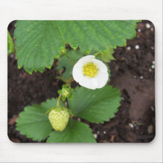 Strawberry Plant Mousepad