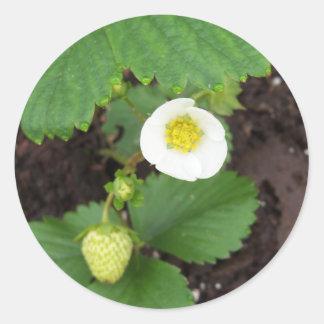 Strawberry Plant Stickers