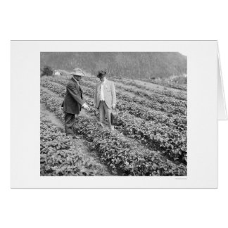 Strawberry Plants Sitka, Alaska 1916 Greeting Card