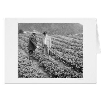 Strawberry Plants Sitka, Alaska 1916 Greeting Card