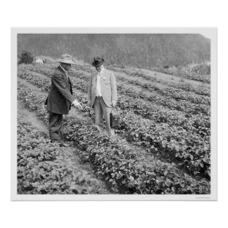 Strawberry Plants Sitka, Alaska 1916 Poster