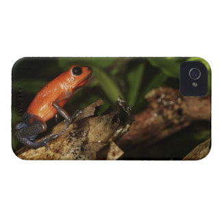 Strawberry Poison-dart frog (Dendrobates 2 iPhone 4 Cover