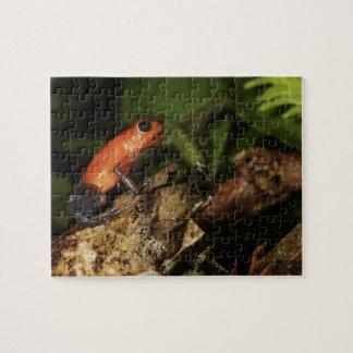 Strawberry Poison-dart frog (Dendrobates 2 Jigsaw Puzzle