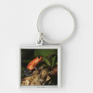 Strawberry Poison-dart frog (Dendrobates 2 Key Ring