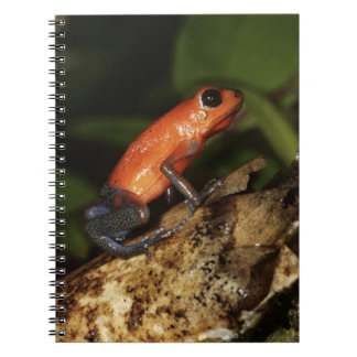 Strawberry Poison-dart frog (Dendrobates 2 Notebooks