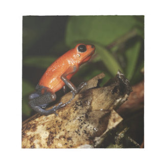 Strawberry Poison-dart frog (Dendrobates 2 Notepad
