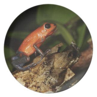 Strawberry Poison-dart frog (Dendrobates 2 Plate