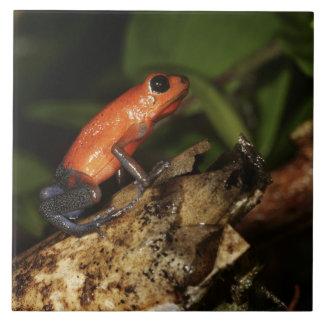 Strawberry Poison-dart frog (Dendrobates 2 Tile