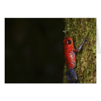 Strawberry Poison-dart frog (Dendrobates Card