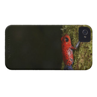 Strawberry Poison-dart frog (Dendrobates iPhone 4 Case-Mate Case