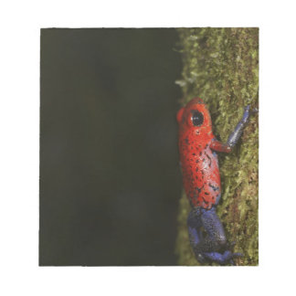 Strawberry Poison-dart frog (Dendrobates Notepad
