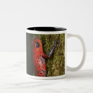 Strawberry Poison-dart frog (Dendrobates Two-Tone Coffee Mug