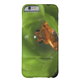 Strawberry poison frog hiding in leaves barely there iPhone 6 case