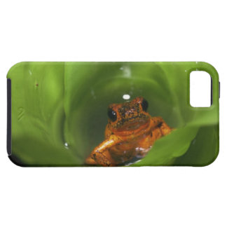 Strawberry poison frog hiding in leaves case for the iPhone 5