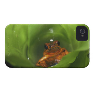 Strawberry poison frog hiding in leaves Case-Mate iPhone 4 case