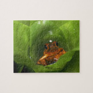 Strawberry poison frog hiding in leaves jigsaw puzzle