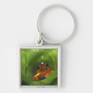 Strawberry poison frog hiding in leaves key ring