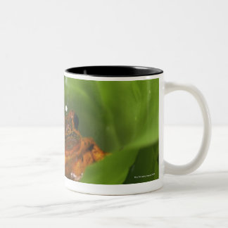 Strawberry poison frog hiding in leaves Two-Tone coffee mug