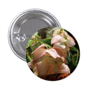 Strawberry Splash Taffet Plant Button