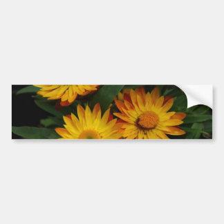 Strawflowers Bumper Sticker