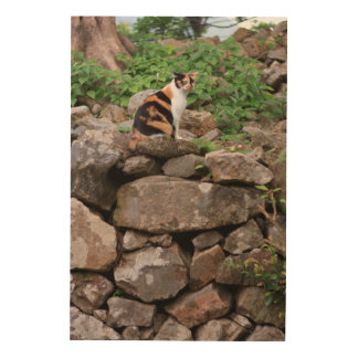 Stray Cat at Nakijin Castle Wood Print