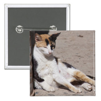 Stray cat in Fes medina, Morocco 15 Cm Square Badge