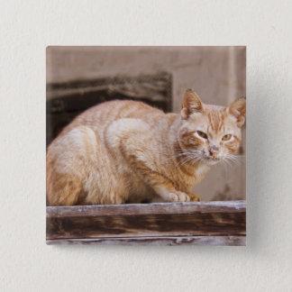 Stray cat in Fes medina, Morocco 2 15 Cm Square Badge