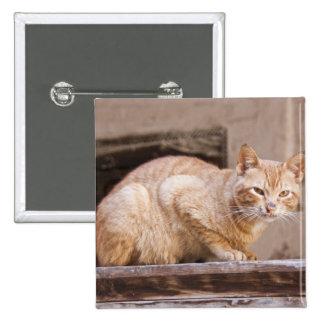 Stray cat in Fes medina, Morocco 2 Pin