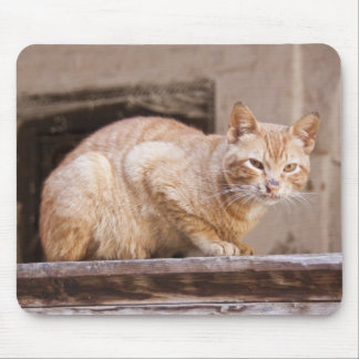 Stray cat in Fes medina, Morocco 2 Mouse Mat