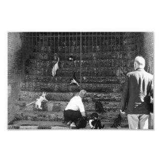 Stray Cats in Venice Italy Street Cat Tourist Photo Print