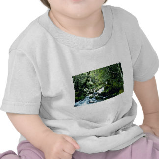 Stream And Forest, Nelson Lakes National Park, Sou Tshirts