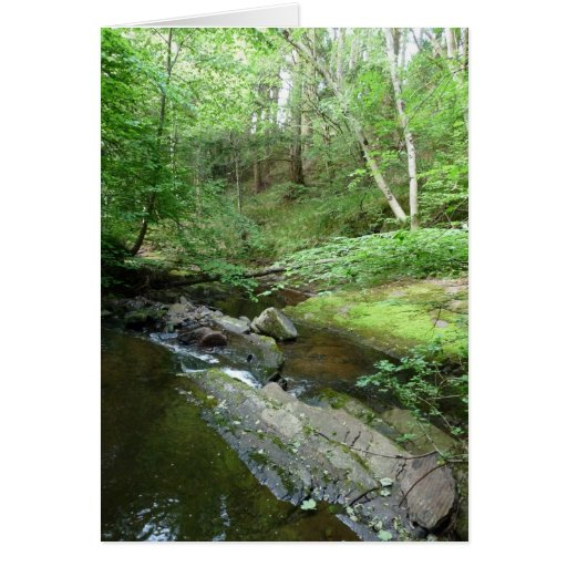 """""""Stream in Northumberland Woods"""" (3) Cards"""