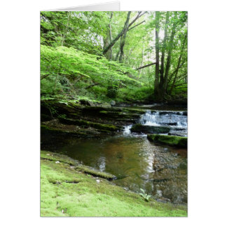 Stream in Northumberland Woods 4 Card