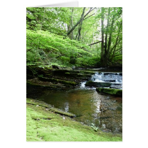 """""""Stream in Northumberland Woods"""" (4) Card"""