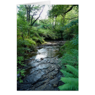"""Stream in Northumberland Woods"" (6) Greeting Card"
