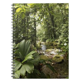 stream in rainforest, Dominica Notebook