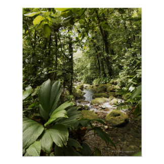 stream in rainforest, Dominica Poster