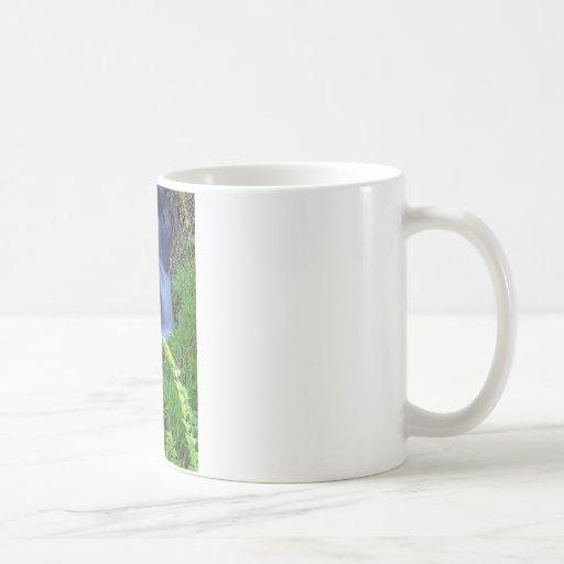 Streams of water! coffee mugs