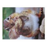 Streifenhörnchen- Postkarte Postcard
