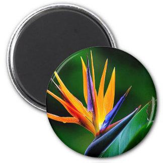 Strelitzia. Bird of paradise flower. 6 Cm Round Magnet