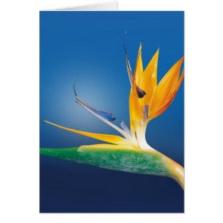 Strelitzia. Bird of paradise flower. Card