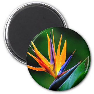 Strelitzia. Bird of paradise flower. Magnet