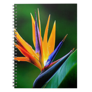 Strelitzia. Bird of paradise flower. Notebooks