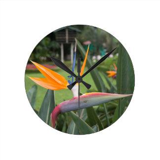 Strelitzia Bird of paradise flower / plant Clocks