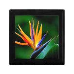Strelitzia. Bird of paradise flower. Small Square Gift Box