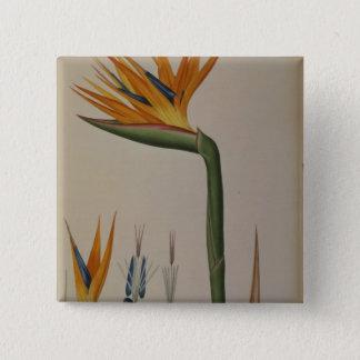 Strelitzia Reginae, from 'Les Strelitziacees' 15 Cm Square Badge
